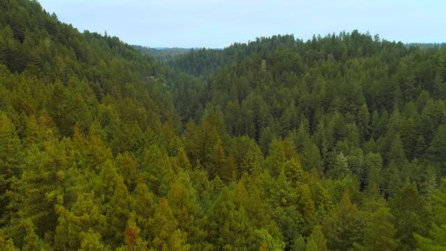 der wald von sequoias in nordkalifornien, usa westküste - staatspark stock-videos und b-roll-filmmaterial