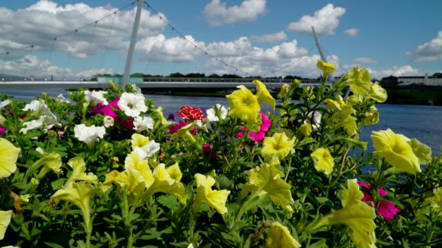 the fresh flowers and the peace bridge - графство дерри стоковые видео и кадры b-roll