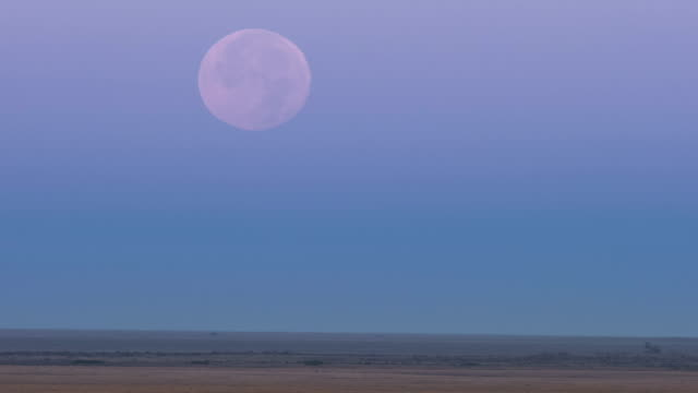 The full moon is visible in the afternoon sky above horizon on the wild and green prairie of Torgay Kazakhstan. The full moon is visible in the afternoon sky above horizon on the wild and green prairie of Torgay Kazakhstan. prairie stock videos & royalty-free footage