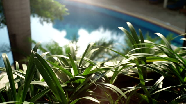 The garden decorated beside swimming pool. video