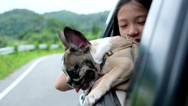 The girl and the puppy traveled around the countryside by car, opening the window with excitement.