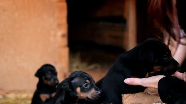 flickan väljer doberman valp - hunddjur bildbanksvideor och videomaterial från bakom kulisserna
