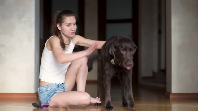 The girl hardly copes with a large strong dog, which needs to be combed out The girl hardly copes with a large strong dog, which needs to be combed out with a special comb. Pet Care fur stock videos & royalty-free footage