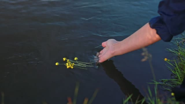 the girl lowers the flowers in the river the girl puts flowers in the river on Ivana Kupala vascular plants stock videos & royalty-free footage