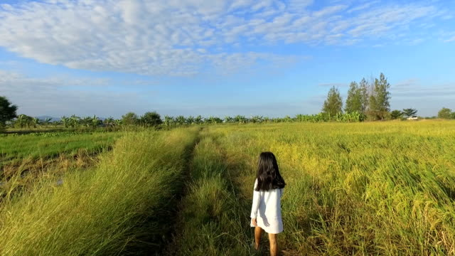 The girl walks in the morning field. video