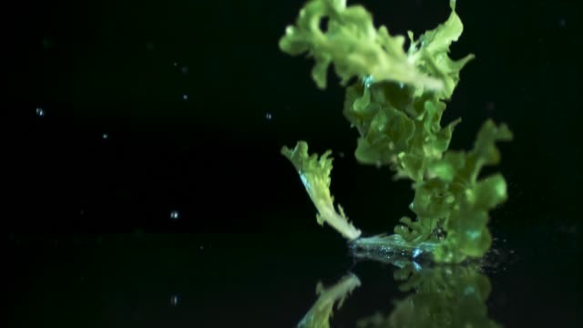 the goodness of green - латук стоковые видео и кадры b-roll