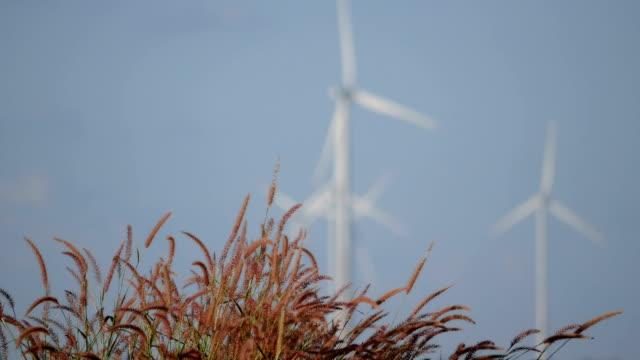 die grasblumen schwanken im wind und verschwommen die windräder drehen sich an einem klaren tag. - elektrischer generator stock-videos und b-roll-filmmaterial