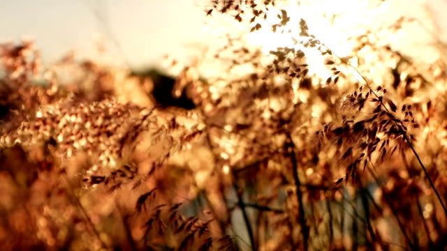 the grass is blown in the evening with the sun falling. - morbidezza video stock e b–roll