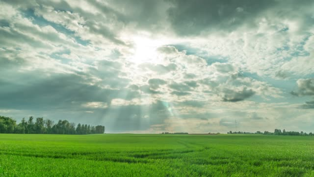 The green field and dramatic sky, time-lapse