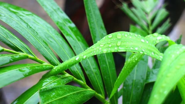 the green leaves are wet because of exposure to rain - pianta vascolare video stock e b–roll