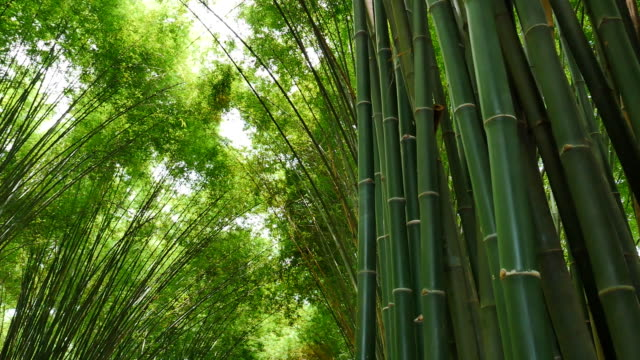 The greenery tunnel of bamboo in the forest video