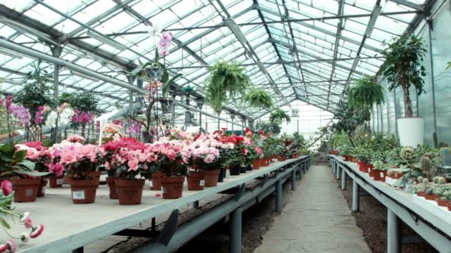 vídeos y material grabado en eventos de stock de el invernadero de flores - ajardinado