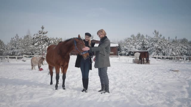 The guy and the girl stroke adorable horse on a country ranch in the winter season. The guy and the girl stroke adorable horse on a country ranch in the winter season. A young couple walks outdoors on a farm with horses. Slow motion. mare stock videos & royalty-free footage