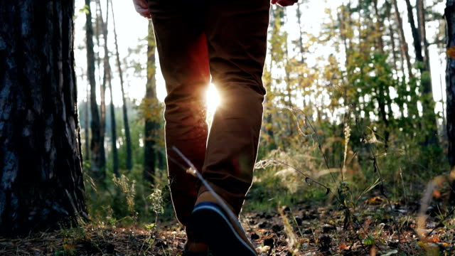 The guy walks in the autumn forest at sunset. Slow motion - vídeo