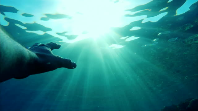 The hand under the water stretches towards the sun. Beautiful rays illuminate it. Concept - need help, rescue video