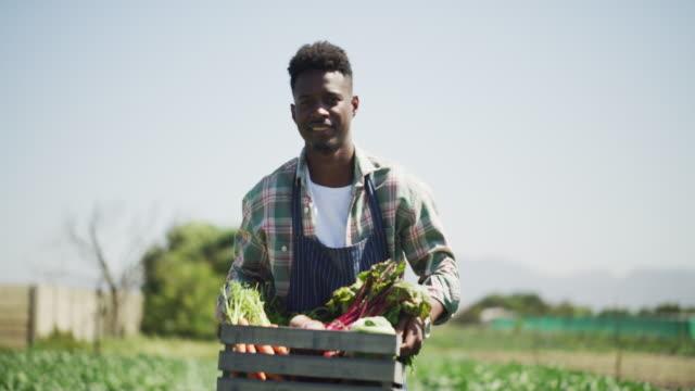 vídeos de stock e filmes b-roll de the harvest is here - comida sustentavel