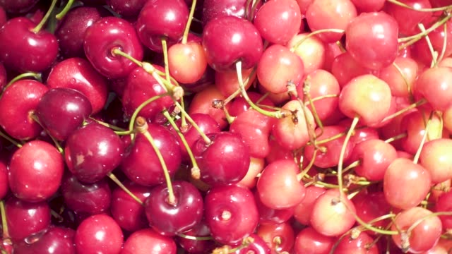 The harvest of juicy cherry on the plate rotates A harvest of beautiful yellow and red juicy cherries on a white plate revolves around top view cherry stock videos & royalty-free footage