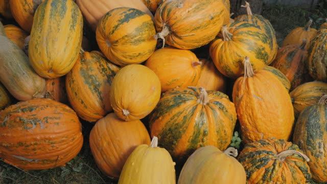 the harvested pumpkins on the heap - zucca legenaria video stock e b–roll