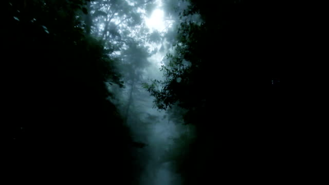 the haunted  forest - trees in mist stock videos & royalty-free footage