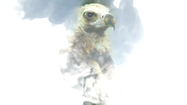 The head of a vulture appears on a white background of smoke