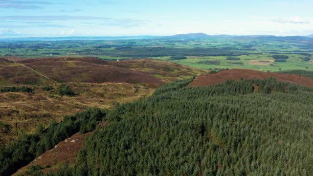 The high angle aerial view of Scottish countryside in early morning summer sunlight The view from a drone as it is flown above a hill. The scene includes pine forest and heather growing on the hillside. The rural landscape is seen in the background. The location is in Dumfries and Galloway, south west Scotland. galloway scotland stock videos & royalty-free footage