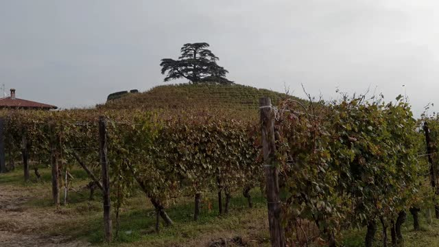 la collina del cedro del libano a la morra - langhe video stock e b–roll