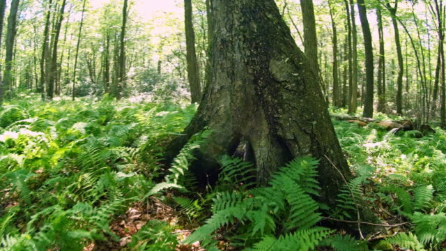 the hollow in the tree, in the forest in poconos, pennsylvania - горы поконо стоковые видео и кадры b-roll
