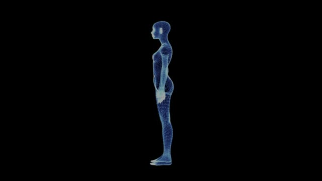 vídeos de stock e filmes b-roll de the hologram of a rotating woman body - anatomia