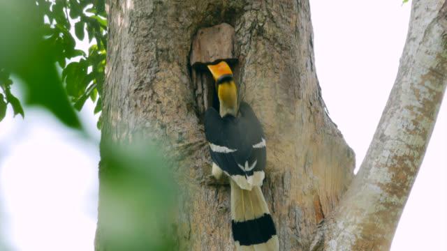 The hornbill is feeding in a wooden jar on a tree.
