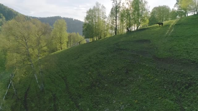 vídeos de stock, filmes e b-roll de o cavalo vai sobre a montanha no por do sol, aéreo, vídeo - sérvia