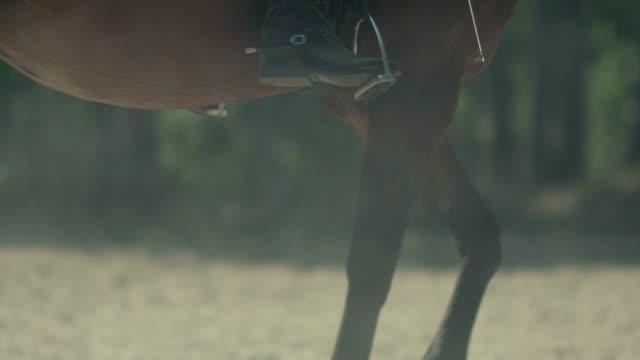 the horse goes passage. stirrups. allure passage - скаковая лошадь стоковые видео и кадры b-roll