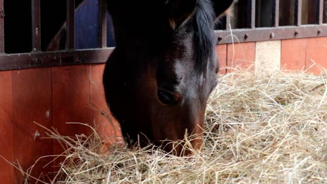 vidéos et rushes de le cheval mange du foin dans une étable - foin
