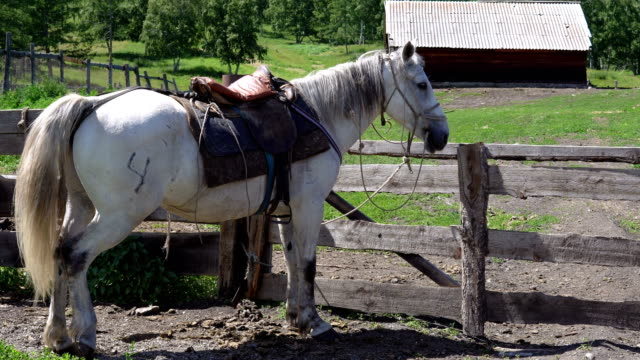 The horse stands next to the pen. A horse of white color is standing next to a pen in the countryside. corral stock videos & royalty-free footage