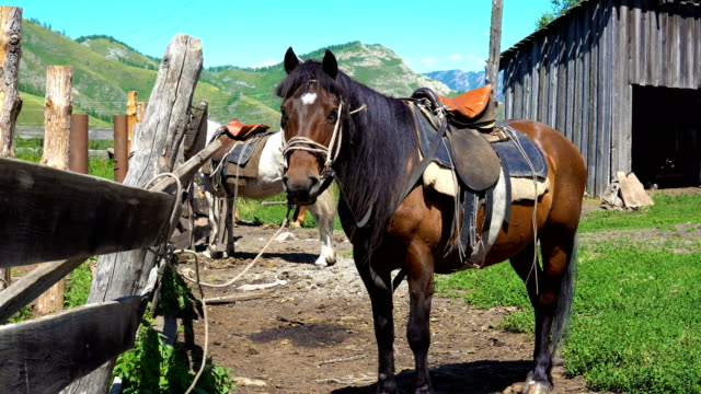 The horse stands next to the pen. A horse of brown color is standing next to a pen in the countryside in the mountains. corral stock videos & royalty-free footage