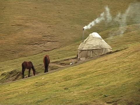 horsecar in die berge. - hengst stock-videos und b-roll-filmmaterial