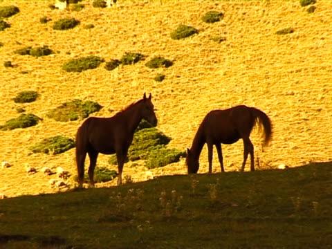horsecar in die berge. - pferdeartige stock-videos und b-roll-filmmaterial