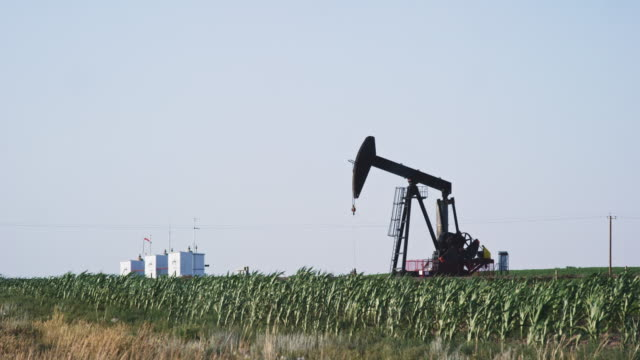 The Horsehead and Walking Beam of an Oiljack Pump Bobs up and Down as It Pumps Oil from under the Ground in the Middle of a Corn Field in Alberta, Canada underneath a Clear, Sunny Sky