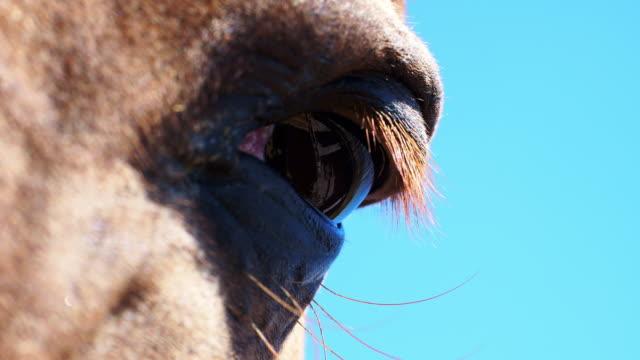 stockvideo's en b-roll-footage met de ogen van het paard - vachtpatroon