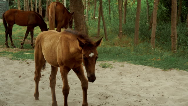 the horses walks outdoors video