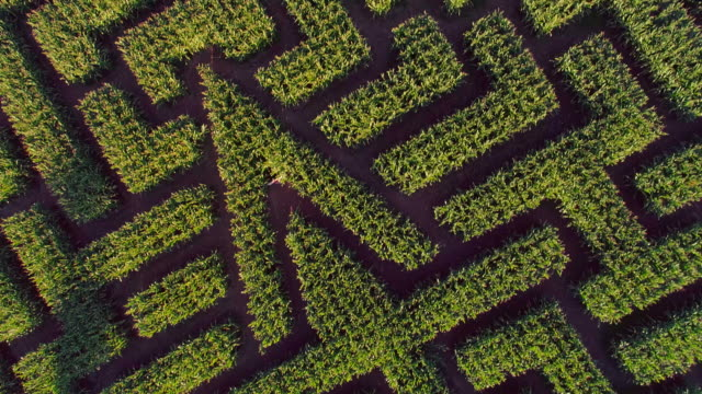 The huge Halloween's Corn Maze in Pennsylvania, Poconos Region. Directly above aerial drone video video
