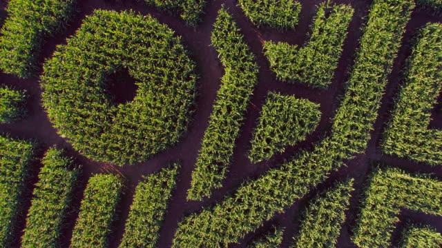 The huge Halloween's Corn Maze in Pennsylvania, Poconos Region. Directly above aerial drone video