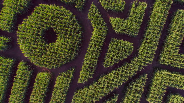 the huge halloween's corn maze in pennsylvania, poconos region. directly above aerial drone video - puzzle video stock e b–roll