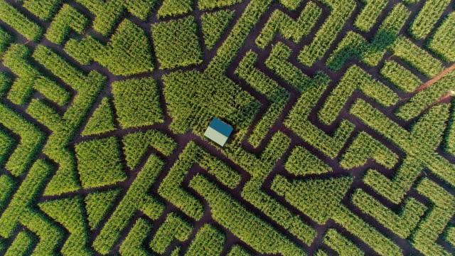 The huge Halloween's Corn Maze in Pennsylvania, Poconos Region. Directly above aerial drone video video