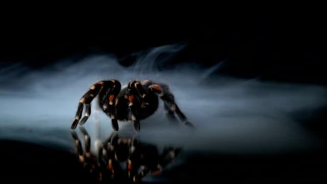 Die riesige Vogelspinne erstarrte in der Milch Rauch, auf dem Spiegel. Slow-motion – Video
