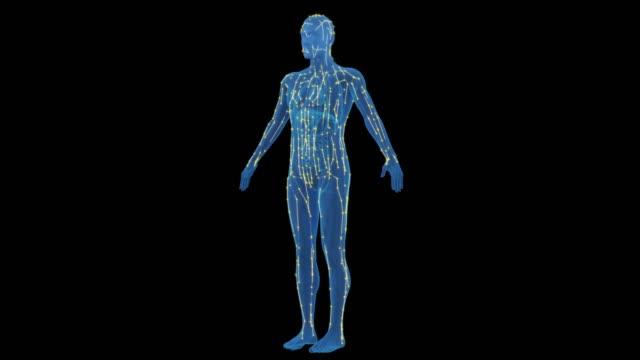människokroppen meridianen - acupuncture bildbanksvideor och videomaterial från bakom kulisserna