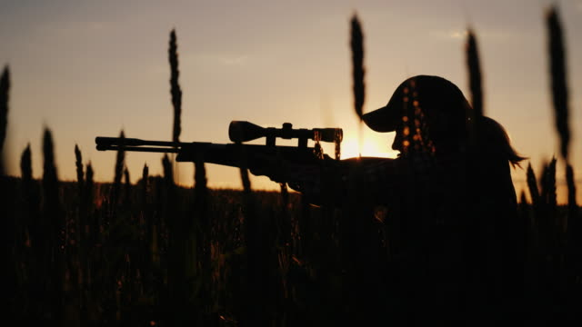 The hunter is hiding in thickets, aiming from a rifle with an optical sight A sniper rifles from a rifle with an optical sight. On the Sunset. Sports shooting and hunting concept. 4K video gun stock videos & royalty-free footage
