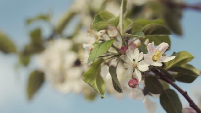 insekten körs på en blomma. - fruktträdgård bildbanksvideor och videomaterial från bakom kulisserna