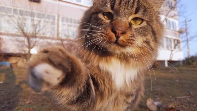 vídeos de stock, filmes e b-roll de o gato de karatê engraçado bate a câmera com sua pata na rua, gato sem-teto - felino
