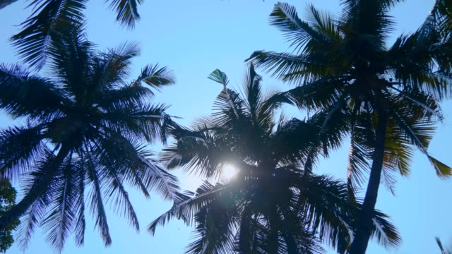 The krone of palm trees are moving against the blue sky, Goa, India
