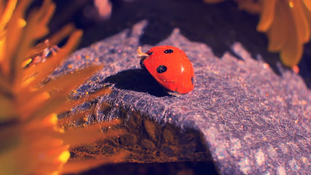 The ladybug rests on a warm stone. Washed and cleaned. Super macro 4k video